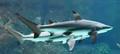 Omaha Zoo Sharks