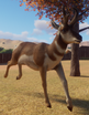 Pronghorn (Planet Zoo)