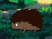 Rileys Adventures European Hedgehog