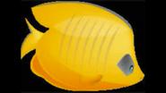 Safari Island Butterflyfish