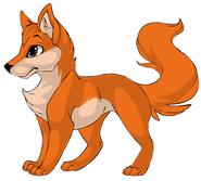 Dash The Dingo