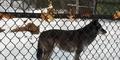 Seneca Park Zoo Wolf