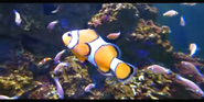 Tennessee Aquarium Clownfish