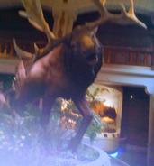 Toledo Zoo Moose