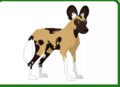 African Wild Dog AM.PNG (2)