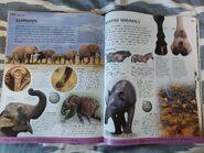 Animal (DK Online) (132)