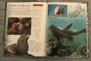 Mammals (Eye Wonder) (18)