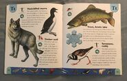 Polar Animals Dictionary (23)