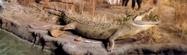 Rolling Hills Zoo Nile Crock