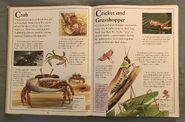 The Kingfisher First Animal Encyclopedia (19)