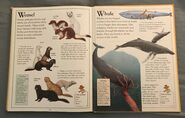 The Kingfisher First Animal Encyclopedia (73)