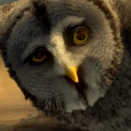 Twilight (Legend of the Guardians - The Owls of Ga'Hoole)