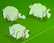Zoo-cup-051-sheep