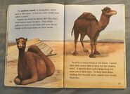 Awesome Animals (Road to Reading) (16)