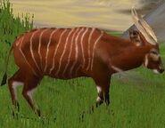 Bongo-wildlife-park-2