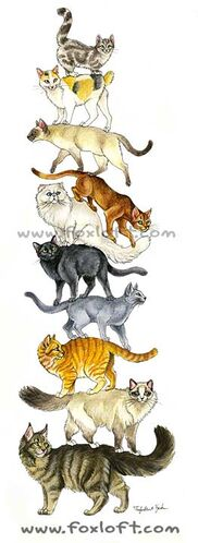 Cat Stack.jpg