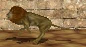 Lion-zoo-empire