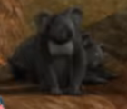 Superbook Koala