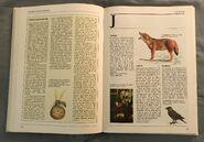 The Kingfisher Illustrated Encyclopedia of Animals (78)