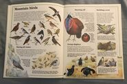Usborne World Wildlife- Mountain Wildlife (10)