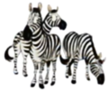 Zebra hugo safari pc