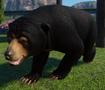 Bear, Sun (Planet Zoo)