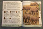 Fantastic World of Animals (70)