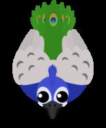 Mopeio Peacock