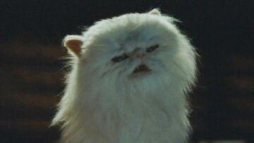Mr. Tinkles the Evil Cat.jpg