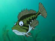 Rileys Adventures Largemouth Bass