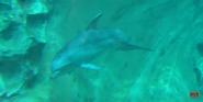 Georgia Aquarium Dolphin