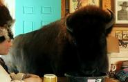 Preposterous Pets Bison