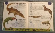 Reptiles and Amphibians Dictionary (5)