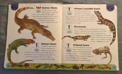 Reptiles and Amphibians Dictionary (5).jpeg