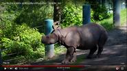 Woodland Park Zoo Rhino