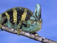 Amazing-animals-activity-center-chameleon