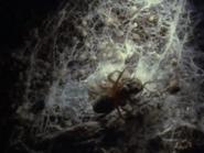 Amazing-animals-activity-center-spider