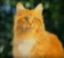 Cat-disneythinkfast