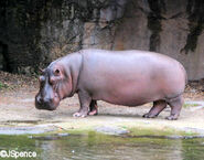 Hippo2010a