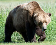 Hunchback of Notre Dame 2 Bear