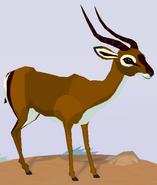 Impala WOZ