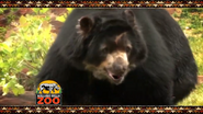 Rolling Hills Zoo Andean Bear