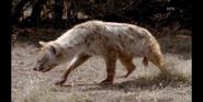 Scout's Safari Hyena