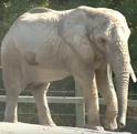 Tronto Zoo Elephant
