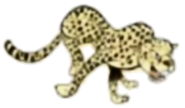 Cheetah hugo safari pc