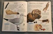 DK Encyclopedia Of Animals (89)