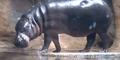 LPZ Hippo