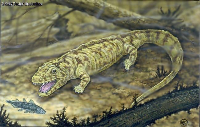 Anthracosaurus