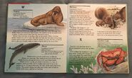 My First Book of Animals from A to Z (29)