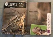 Scaly, Slippery Reptiles (1)